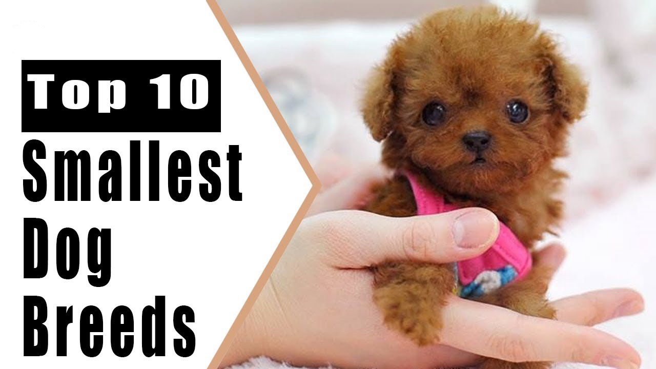 Top Ten Small Dogs